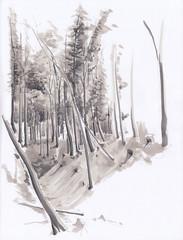 Hittisberg (Flaf) Tags: wood trees art drawing workshop land marker florian wald bume landart freie vorarlberg bregenzer flaf hittisau hittisberg afflerbach zeichnerei