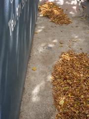 tel 971 (the incredible how (intermitten.t)) Tags: street light espaa leaves wall pavement menorca ma baleares mahon minorca balearicislands illesbalears dappledlight 20113 noautotagsadded