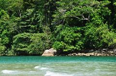 praia e floresta: pas tropical (Ruby Ferreira ) Tags: beach oceanbeach notreatment mataatlntica bertiogasp litoralnortepaulista praiaocenica praiadeguaratuba