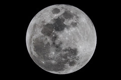 Snow Moon over Florida (Danny McCullough) Tags: moon fullmoon nightphotography lunar canon photography