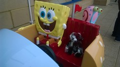 Adventures with Spongebob (zaramcaspurren) Tags: charliebears teddybear teddybears teddies stuffedtoy stuffedtoys stuffedanimal stuffedanimals softtoys softtoy plush plushtoy plushies plushtoys
