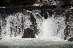 "Fish swimming up a waterfall • <a style=""font-size:0.8em;"" href=""http://www.flickr.com/photos/63501323@N07/33126754631/"" target=""_blank"">View on Flickr</a>"