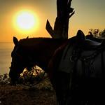 Punta Islita Sunset Horseback Ride thumbnail