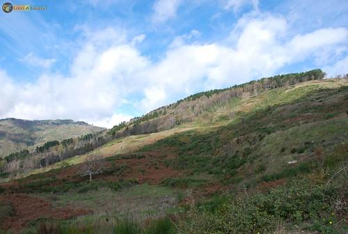 CZ-Lamezia terme-Acquafredda il bosco 7156_L