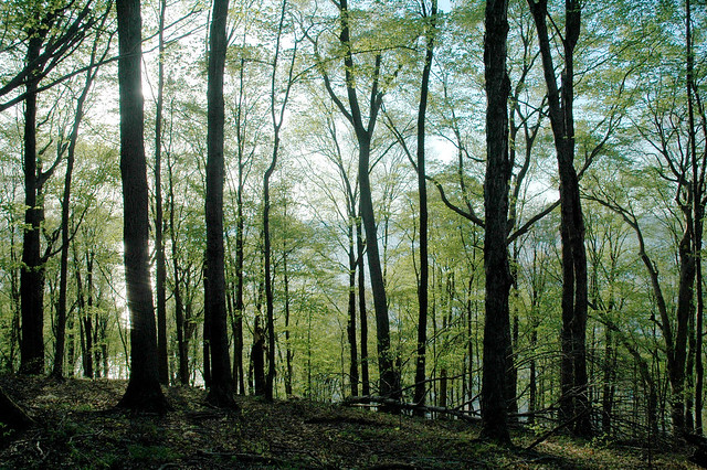 Hoosier National Forest - Waldrip Ridge - April 2006