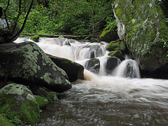 IMGPG15641 - Great Smoky Mountains National Park - Roaring Fork (David L. Black) Tags: nationalparks greatsmokymountainsnationalpark