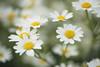 First day of summer vacation (Birgit F) Tags: park flowers norway grimstad austagder dømmesmoen