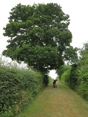 under the tree (squeezemonkey) Tags: dog tree walking countryside path hedge footpath tetford
