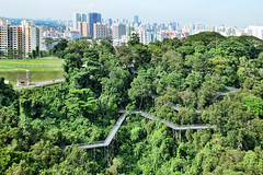 Forest Walk (chooyutshing) Tags: singapore zigzag forestwalk secondaryforest telokblangahhill steelwalkeay