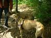 LakeWaban6-17-2012007