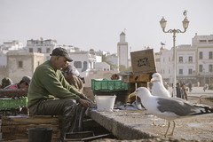 Essaouira - Street Worker - 2 (aminefassi) Tags: street leica travel people copyright fish lumix candid panasonic morocco maroc getty worker essaouira moroccan  photographe elmarit m43 marocain  45mmf28 dmcgf3 aminefassi
