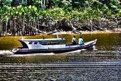 Belem out-2013-0244-Editar (caroldantas33) Tags: brasil natureza selva ros indios floresta par belm aa