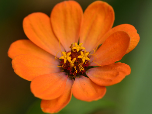 orange plant flower nature garden natural uv lavender bloom zinnia