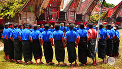 Ritual Dance in Toraja (holycowproducts) Tags: blue houses people death dance asia traditional funeral ritual tanatoraja traditionaldance tongkonan ritualdance tribalhouses funeralceremony ethnichouses