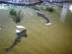 """The Monterey Bay Aquarium • <a style=""""font-size:0.8em;"""" href=""""http://www.flickr.com/photos/109120354@N07/11042936466/"""" target=""""_blank"""">View on Flickr</a>"""