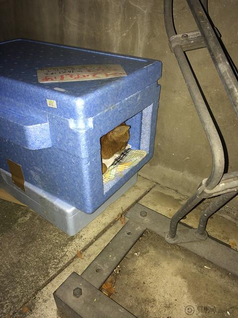 Today's Cat@2013-12-05