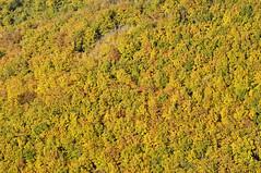 Forêt cévenol