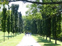Walking Between Trees