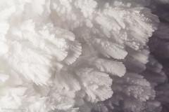 IMG_5872 (perttuluomala.kuvat.fi) Tags: winter snow nature wind lumi talvi ylls