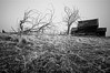 Trees & Shed. (jamesfischer) Tags: abandoned oregon farmhouse frozen kent decay homestead voigtlander15mmf45
