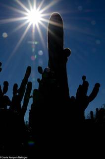 Desert_Botanical_Garden_Phoenix, Arizona