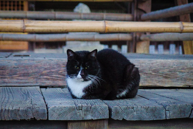Today's Cat@2014-02-04