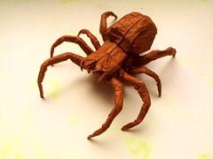 orb weaver (origamiPete) Tags: art paper spider origami box arachnid orb peter pete weaver petr paperfolding folding araneus diadematus pleating pleat boxpleating stuchly stuchlý origamipete