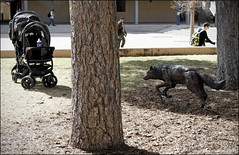 Lobo Stalks the Baby Stroller (newmexico51) Tags: newmexico art statue route66 wolf stroller albuquerque lobo nm stalking unm universityofnewmexico babystroller gregorypeterson