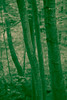 Haunted Abandonment: Farm Tools Slide #2 (Inter-Global Media Network Inc. (very busy)) Tags: trees newyork detail green nature leaves forest woods digitalart scenic surreal upstate eerie foliage bark unknown desolate greentint arboreal mariadorotheacampbell