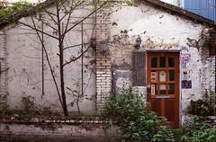 Backyard (Edward M-Y Lin) Tags: film contaxg2 xtra400 planart45mmf2