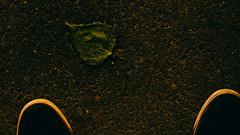 _4140473-8 (25 minutes) Tags: china street city light tree green leave night river spring shot capital beijing olympus snap forbidden nightlight f18 sanlitun 45mm peking omd liangma streetsnap em5 liangmahe mzuiko omdem5
