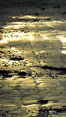 quando a terra brilha (marcia.kohatsu) Tags: sunset summer praia beach earth portobelo santacatarina terra shining perequ brilhando earthshining