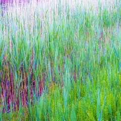 With Ease (eterem) Tags: light plant abstract color nature colors lines canon square photography eos photo colorful with artistic pastel peaceful calm squareformat mind serene feeling easy squared straws ease mindscape bsquare eos1100d