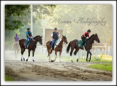Mott Crew (EASY GOER) Tags: summer vacation horses horse ny newyork tourism sports beauty race canon fun athletics track saratoga competition upstate running racing course event 5d ponies athletes tradition races sporting spa thoroughbred equine exciting thoroughbreds compete markiii equines