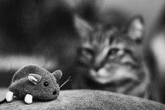 Week 8 - Depth of Field (Black & White) (Janet Cunningham) Tags: cat mouse