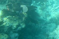 46. John Pennekamp coral reef (Misty Garrick) Tags: johnpennekamp johnpennekampreef johnpennekampcoralreefstatepark coralreef florida keylargofl keylargo floridakeys atlanticocean