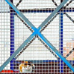 C.A.T. (ИicoW) Tags: photooftheday cats instacat kitty kitten catlover meow catoftheday gato catlovers kittens catfeatures harbour hafen port boats harbor ships ship basque basquecountry euskadi wiring geometry chat chats cross spain españa portugalete country flickr outdoor bridge industrial design industrialdesign