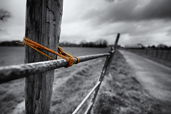 Baler Twine: it's what holds Lancashire together. (nickcoates74) Tags: 12mm 12mmf20 a6000 chorley heskin heskinhall ilce6000 lancashire march samyang sony uk selectivecolour