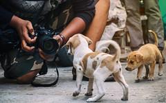 Puppy stories (jithin_devan) Tags: cwc photowalk strret photography chennai