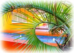 poolside peekaboo (milomingo) Tags: resort hotel saguarohotel scottsdale arizona southwest bold bright vibrant vivid multicolored outdoor getaaway rr vacation hospitality umbrella yellow water nature frond palm green orange curve lines geometry blue photoborder getaway amenity urban cmwd cmwdorange