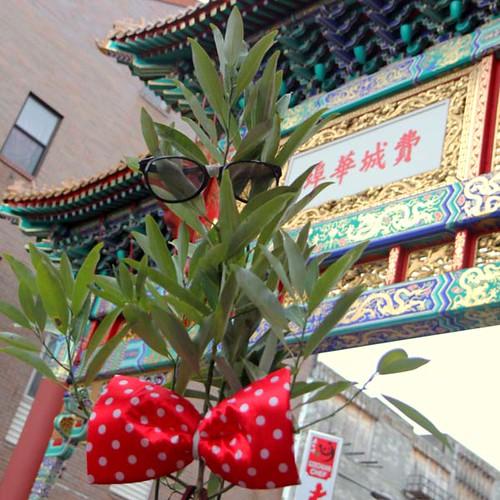 TREE-25188 tree giveaway chinatown_crop