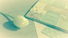 vintage love (babs van beieren) Tags: indoor stilllife tulip flower vintage light soft shadow tabletop springinmykitchen 7dwf floralfriday friday