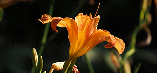 OrangeSummer19 P7130922