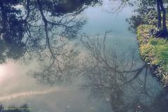 Reflections... IN THE LAKE (aRtphotojart) Tags: lago agua reflejos water lake reflections os bonito