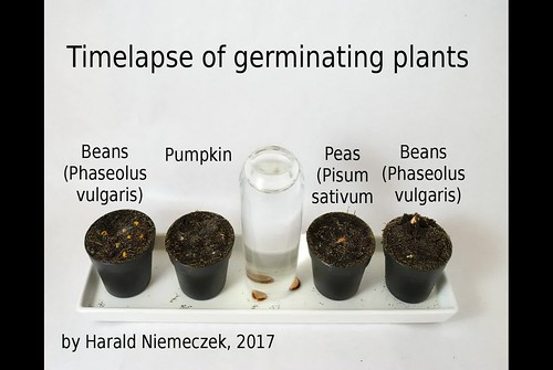 Timelapse of germinating seeds and growing plants
