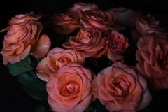 DSC_4724 (PeaTJay) Tags: nikond750 reading lowerearley berkshire macro micro closeups gardens indoors nature flora fauna plants flowers bouquet rose roses rosebuds