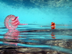 Jellyfish mirror (giuggilopre) Tags: underwater jellyfish water blue sea summer nikon reflect seaweed colorfun pink orange strange liquid sicily
