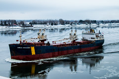 Almost a floating museum (langdon10) Tags: ameliadesgagnes canada canon70d ice quebec ship shoreline stlawrenceriver cold nautical outdoors winter