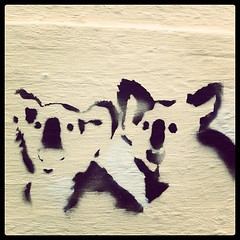 Koalas. #stencil #canberra (KatieTT) Tags: square squareformat 1977 iphoneography instagramapp uploaded:by=instagram foursquare:venue=4bad4730f964a52033413be3