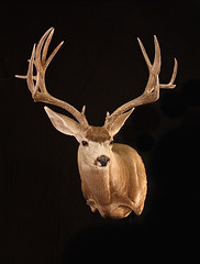 "Utah Taxidermy • <a style=""font-size:0.8em;"" href=""http://www.flickr.com/photos/27376150@N03/9350714459/"" target=""_blank"">View on Flickr</a>"